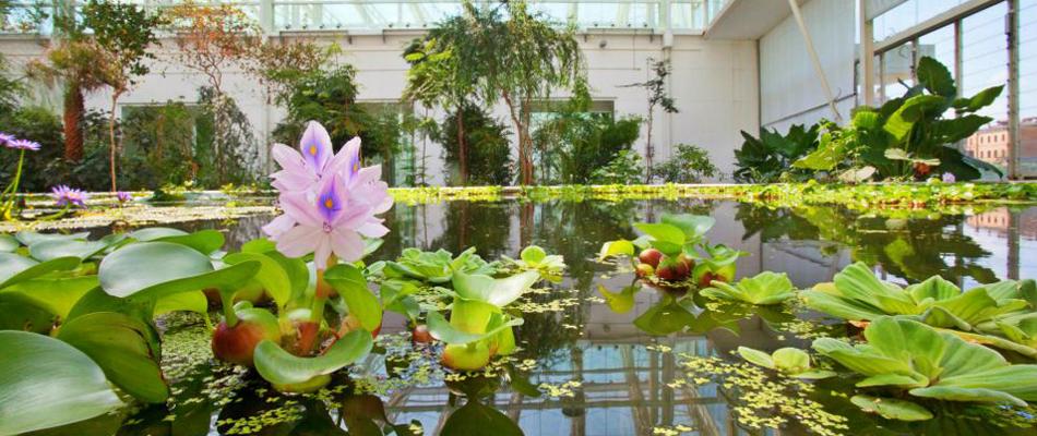3 Motivi per visitare l'orto Botanico di Padova in Estate